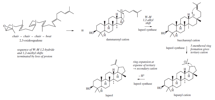 Lupeol biosynthesis.png