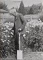 Luther Burbank 1900 Papaver.jpg