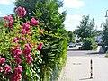 Mühlenbecker Land - Traubeneichenstrasse - geo.hlipp.de - 39606.jpg