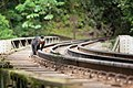 Macaco-prego nos trilhos de trem.jpg