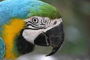 Birds of Eden - A beautiful macaw