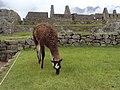 Macchu Picchu, Peru - panoramio (1).jpg