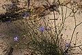 Magnoliophyta sp. (31851382293).jpg