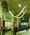 Mammoth sighting (4236344860).jpg