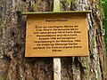 Mammutbäume - panoramio - Johannes Geiger.jpg