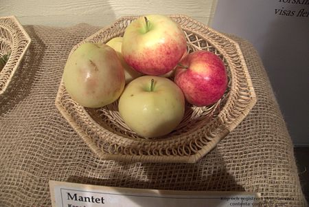 Mantet Apple.jpg