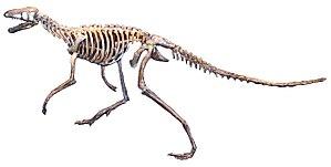 Marasuchus - 50 px