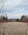 Marsh - Guelph, Ontario 2020-04-18 (04).jpg