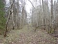 Meža ceļš, Suntažu pagasts, Ogres novads, Latvia - panoramio.jpg