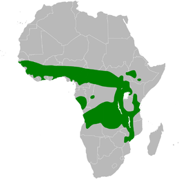 Melocichla mentalis distribution map.png