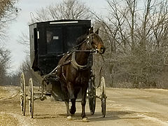 NEW DARK BROWN  HORSE AND BLACK AMISH BUGGY