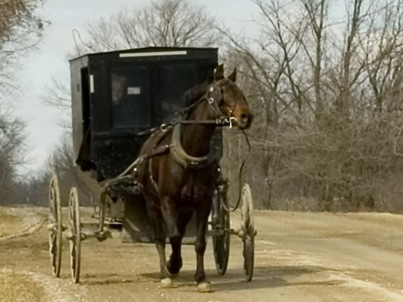Mennonite and carriage publ