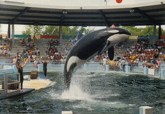 Miami Seaquarium - Image: Miami Oceanarium