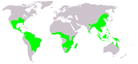 Microhylidae map.png