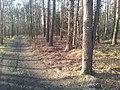 Mikolow, Poland - panoramio (149).jpg