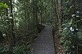 Minnamurra Rainforest - panoramio (14).jpg