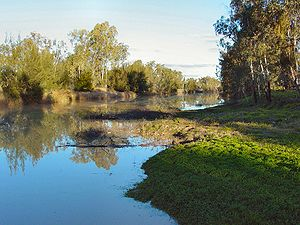 Mitchell, Queensland - Looking downstream on the Maranoa River on the eastern side of Mitchell
