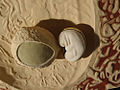 Modell eines menschlichen Eies (Embryo und Plazenta) am Anfang des 2. Entwicklungsmonats (2).jpg