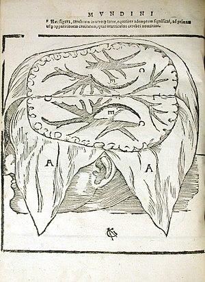 Mondino de Luzzi - Section of Brain in dissected Skull, from Mondino Dei Luzzi's Anatomia Mundini, Ad Vetustis, 1541