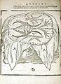 Mondino Dei Luzzi 1541 Brain.jpg