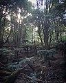 Monga National Park Penance Grove.jpg