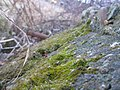 Moss on Concrete in Todd Park - panoramio.jpg