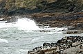 Mussels on rocks washed by waves near Pentire - geograph.org.uk - 1473033.jpg