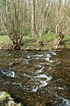 NSG Brander Wald Inde Haumühle.jpg