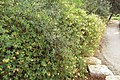National Botanic Garden of Israel 07.jpg