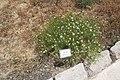 National Botanic Garden of Israel 35.jpg