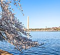 National Mall & Memorial Parks (f3e75527-9c34-459b-a9ef-75d36a44f8dd).jpg