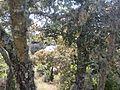Natura 2000 - Cabeção 05.jpg