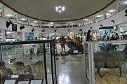 Natural History and Technology Museum of Shiraz University Darafsh (14).JPG