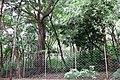 Natural Sandal Forest @ Marayoor - panoramio (2).jpg