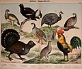 Natural history of the animal kingdom for the use of young people (Plate XXII) (5974392945).jpg