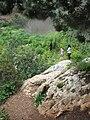 Nesher, Park Nesher, Wadi Katia 011.JPG