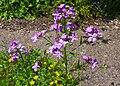 Neuer Botanischer Garten Marburg - 0025.jpg