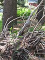New Growth 5-25-14 107.jpg