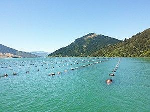 Aquaculture in New Zealand - Mussel farm, New Zealand.