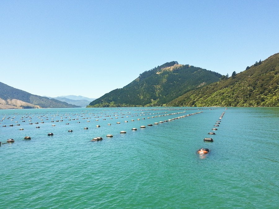 New Zealand Mussel farm-142455