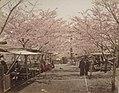 Noge Yama Cherry Blossoms by Tamamura Kozaburo, Honolulu Museum of Art.JPG