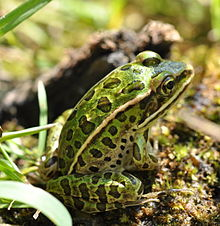Plants and animals in wetlands