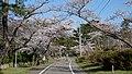 Noshiro Park 20190422c.jpg