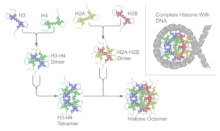 Histone octamer - Wikipedia