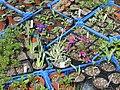 Nursery - Flickr - peganum (19).jpg