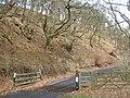 Oak woods, Monynut Water - geograph.org.uk - 1771114.jpg