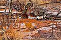 Ohio Valley Mushroom Farm, Acid-Mine Drainage (AMD) (13670964043).jpg