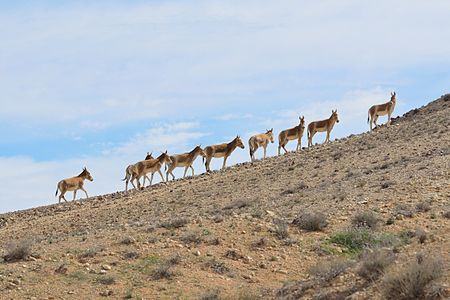 File:Onagers Negev Mountains 1.jpg