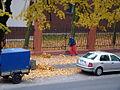 Opadłe liście.jpg
