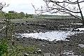 Oranmore Bay - geograph.org.uk - 1252902.jpg
